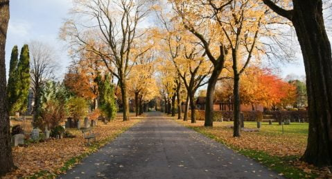 Graveyard in the fall